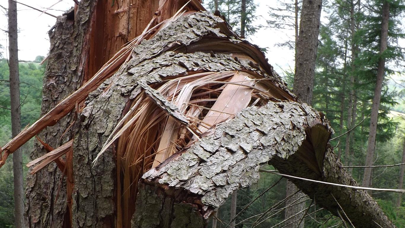 Nurturing Fingle Woods