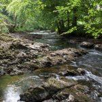 Fingle Woods blog