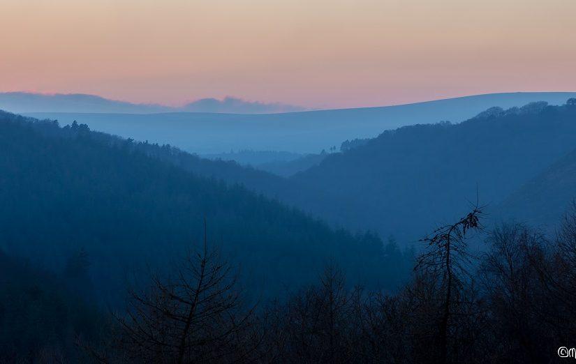 New Fingle Woods blog