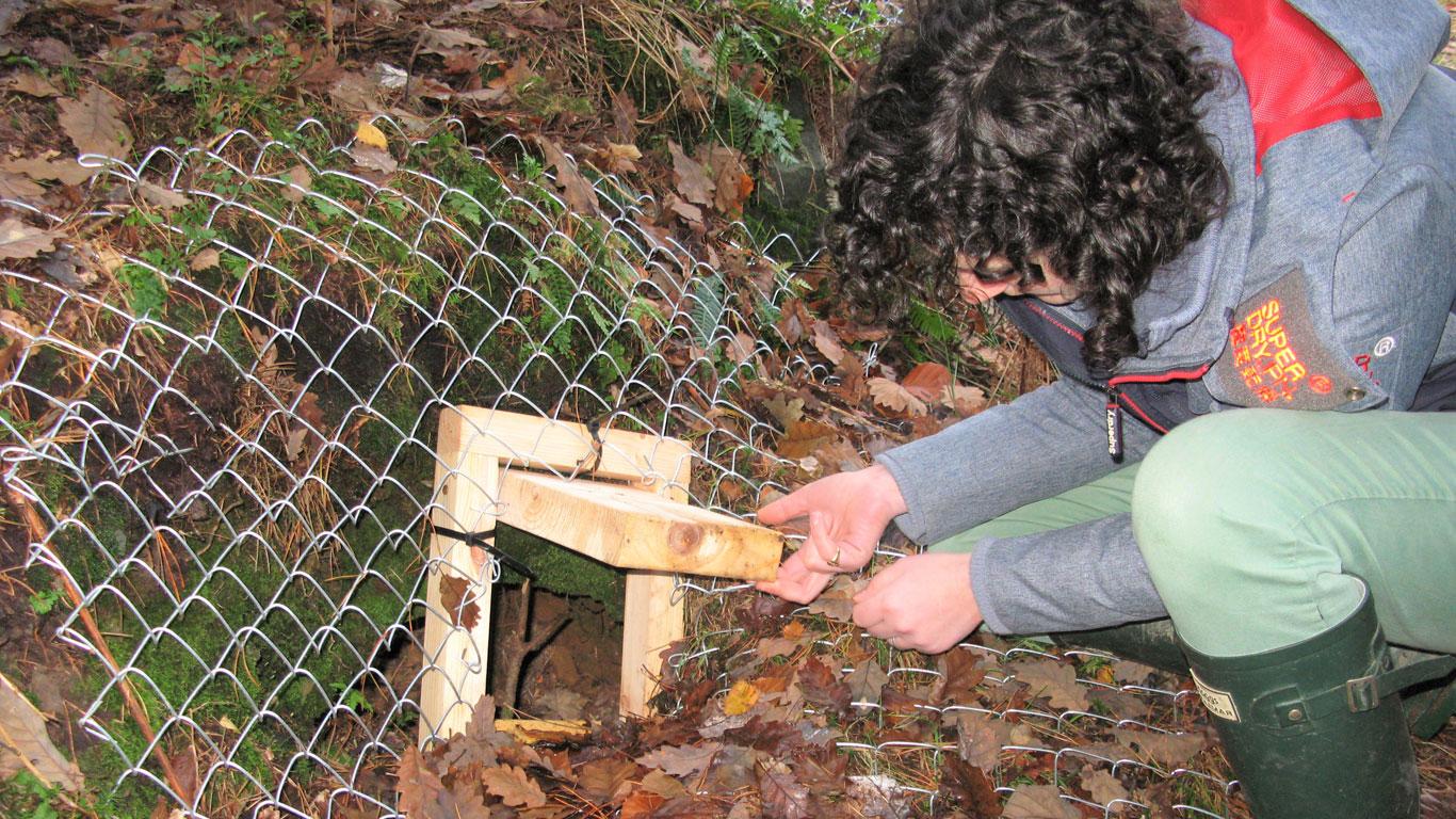 Checking the gate on the badger sett