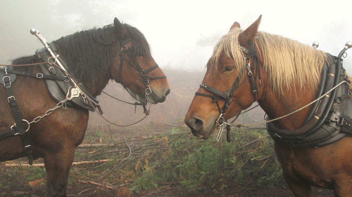 Bronze age horses!