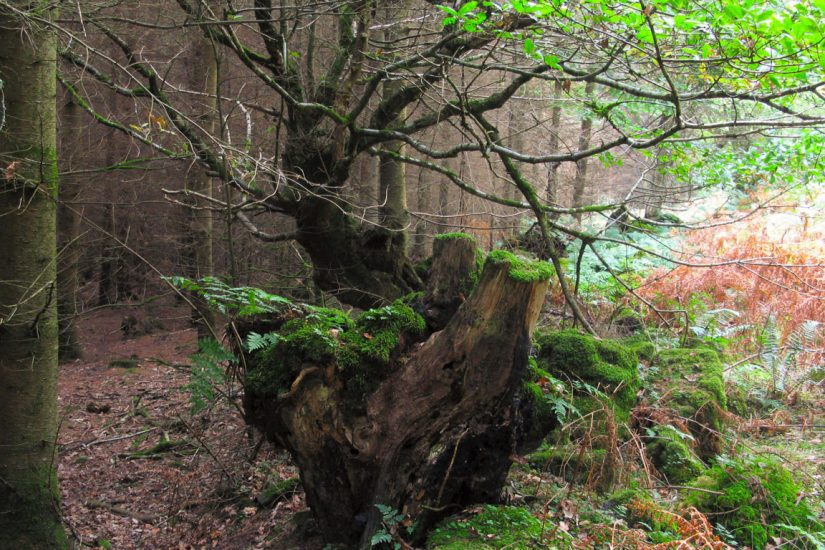 History of Fingle Woods