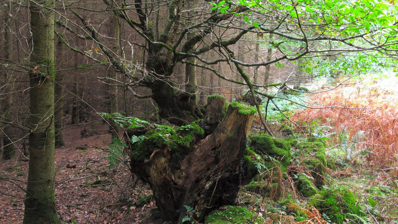 History of Fingle Woods
