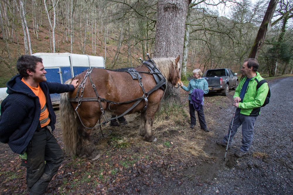 Walkers meet Heavy Horse by river Teign