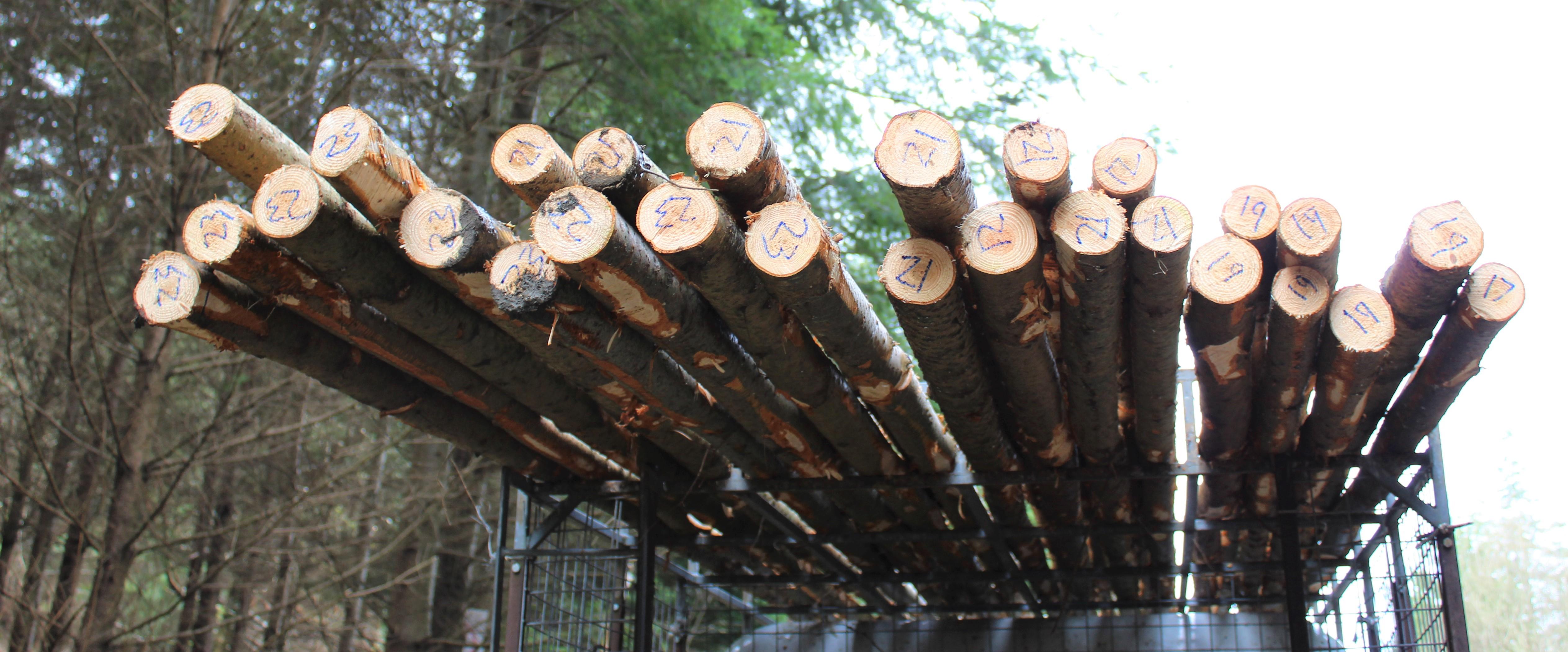 Fingle timber