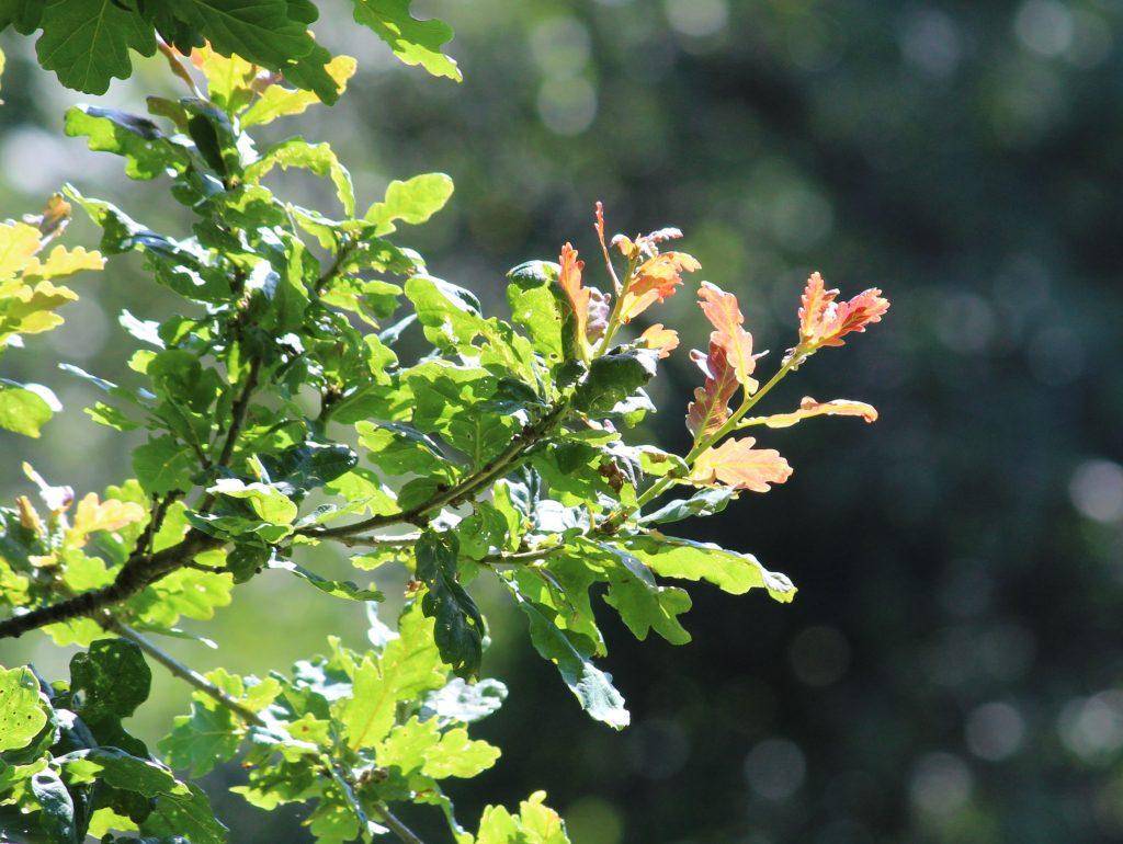 Fingle Woods summer