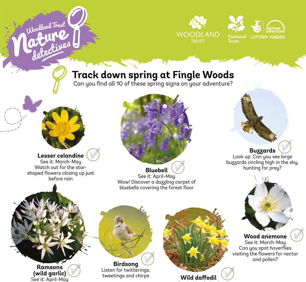 Fingle Woods spring detective