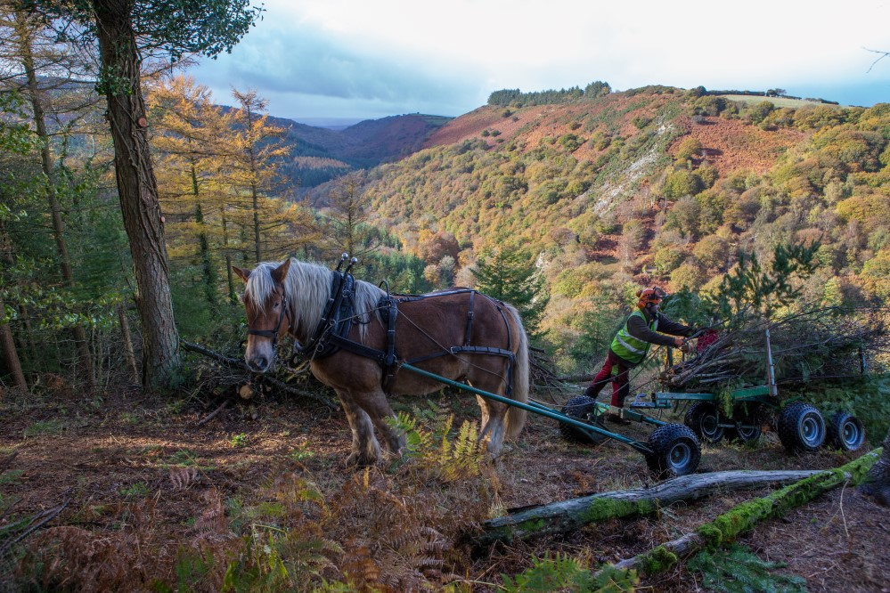 Heavy horses at Fingle Hillfort