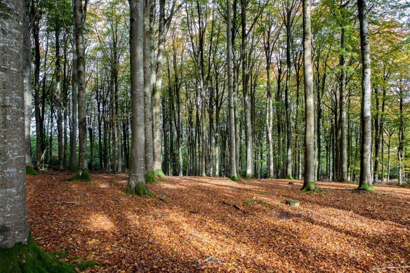 Autumn colour Fingle Woods