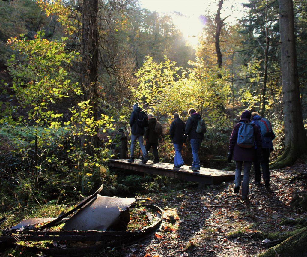 Fingle woods walk