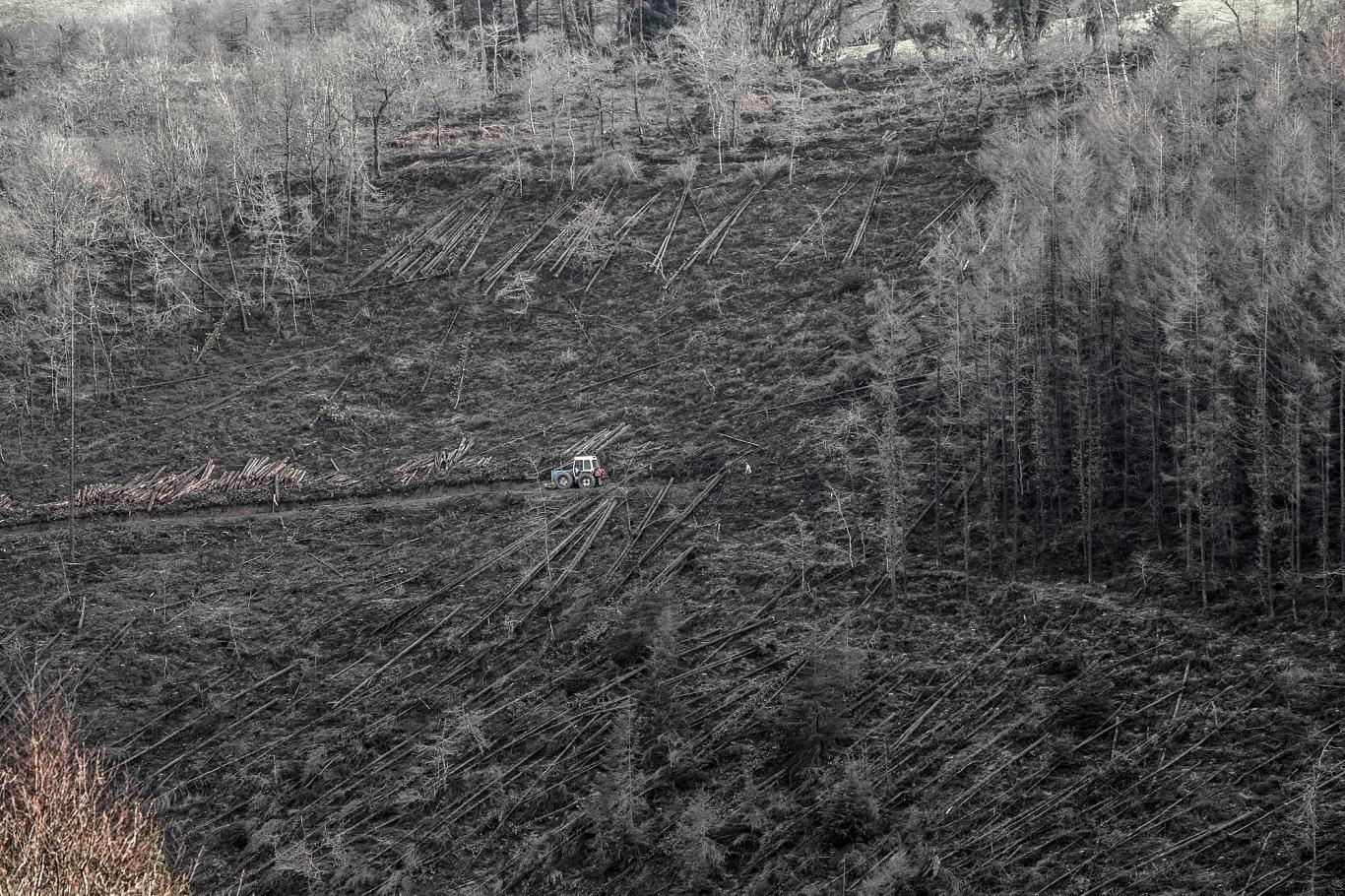 Fingle Woods, Dartmoor